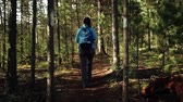 balans : Young woman tourist with backpack is walking in the forest on sunny day. Back view