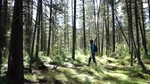 Young woman tourist with backpack is walking in the forest on sunny day. Long shot Stok Video