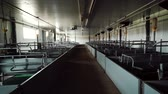 Maternity room is in empty modern industrial pig farm Stok Video