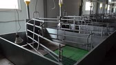 hog : empty newest pens in maternity room are on modern industrial pig-breeding farm Stock Footage