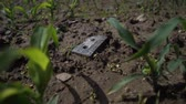 poškozené : The old tape cassette is broken on the ground. Young plants are sprouting around as a symbol of the new digital age. 4K Slow Mo