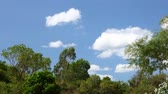 Tropical sky and jungle treetops time lapse with bright white cloud formations moving left to right and deep blue skies. Static camera shot in hd.