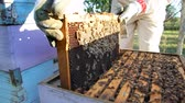 male animal : Beekeeper puts the honeycomb in a hive