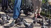 domestic : Elderly people feeding pigeons