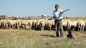 cão de pastor : Shepherd playing with his dog and keeping the sheep Vídeos