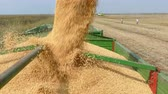 soja : Combine harvester transferring freshly harvested soybean to tractor-trailer for transport