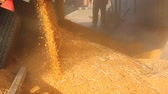 Loading Corn into the Silo Vídeos