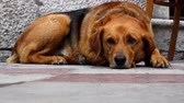 lovable : Lonely sad dog lying in the street