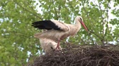 finomság : Stork in nest