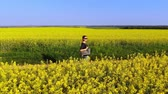 oleaginosa : Aerial drone shot of beautiful woman walks along the country road and enjoys in a yellow oil seed rape flowers field Stock Footage