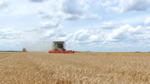 reaping : Combine harvesters working on the wheat field