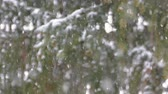 close up : Snowing with spruce fir trees, snowflakes on the mountain, winter season slow motion