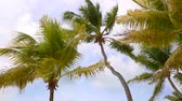 backlight : Tropical palm trees in the wind
