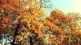 Colorful autumn leaves in the wind, sepia tone