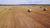 semente : drone forward flight over field with hay bales. Stock Footage