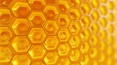 cera de abelha : Animation of fragment of honeycomb with full  cells in bright sunlight.