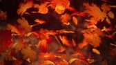 kasım : Close up on falling autumn leaves