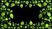 акцент : Green Plant pattern is growing on black in HD 1080.