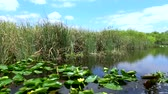 юг : Amazing Airboat Ride through the Everglades of South Florida