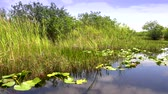 krokodyl : The amazing nature of the Everglades in Florida