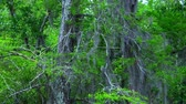 vegetação : Wild vegetation in Louisiana swamps