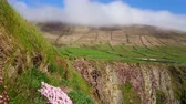 ireland : Amazing cliffs at Dingle Peninsula - wonderful landscape Stock Footage
