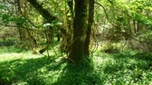 ireland : Amazing nature in the wild forest of Killarney National Park in Kerry Ireland