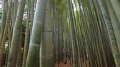buddhismus : Bamboo Forest in Japan - a wonderful place for recreation - TOKYO  JAPAN - JUNE 17, 2018