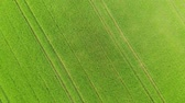 рапсовое : Grasslands and country fields from above - aerial drone flight Стоковые видеозаписи