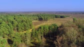 radura : New Forest National Park in Inghilterra dall'alto