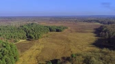 arboretum : New Forest National Park in England from above Stock Footage
