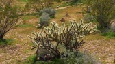 planalto : Cactus in the desert
