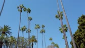 родео : Driving through Beverly Hills with its palm trees - travel photography
