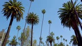 родео : Palm Tree Alley - typical for Beverly Hills - travel photography Стоковые видеозаписи
