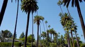 родео : The Palm trees of Beverly Hills - travel photography