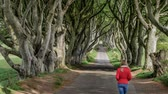 hagen : The Dark Hedges - a famous location in Northern Ireland Stockvideo