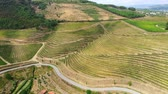 winorośl : The vineyards of Douro Valley in Portugal - the land of famous port wine