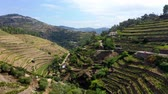 portugália : Flight over Douro valley in Portugal with its famous vineyards