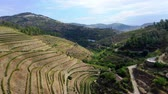 portugália : Aerial view over Douro valley in Portugal and the port wine vineyards Stock mozgókép