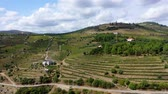 vinice : The vineyards of Douro Valley in Portugal - the land of famous port wine