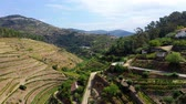 portugália : The vineyards of Douro Valley in Portugal - the land of famous port wine