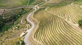 üzüm bağları : The vineyards of Douro Valley in Portugal - the land of famous port wine