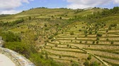wine : The amazing landscape of Douro Valley in Portugal with its famous vineyards
