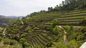 tepeleri : Beautiful Portugal - the vineyards at Douro Valley called Vale do Douro Stok Video