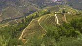 colline : The vineyards at Douro valley in Portugal - great landscape
