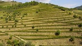 winorośl : The vineyards at Douro valley in Portugal - great landscape
