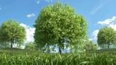 wind : Multiple Trees Growing Stock Footage