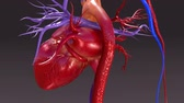venous : Circulatory System