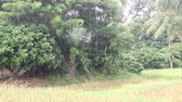 drench : rain falling on the rural area or countryside in Thailand Stock Footage