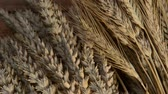 agronomists : still life with wheat and barley, zoom out Stock Footage